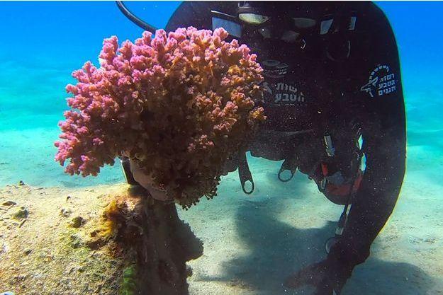 Illustration d'un morceau de corail.