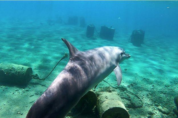 Illustration d'un dauphin.