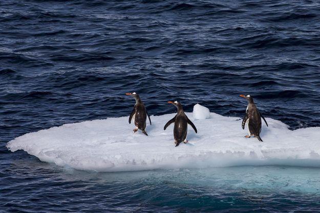 Antarctique.