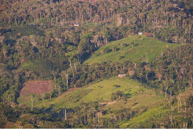 L'Amazonie côté Pérou.