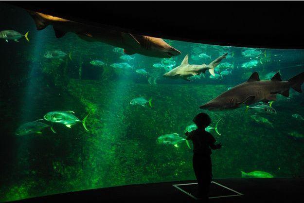 Un bassin de requins à Nausicàa, Boulogne-sur-Mer.
