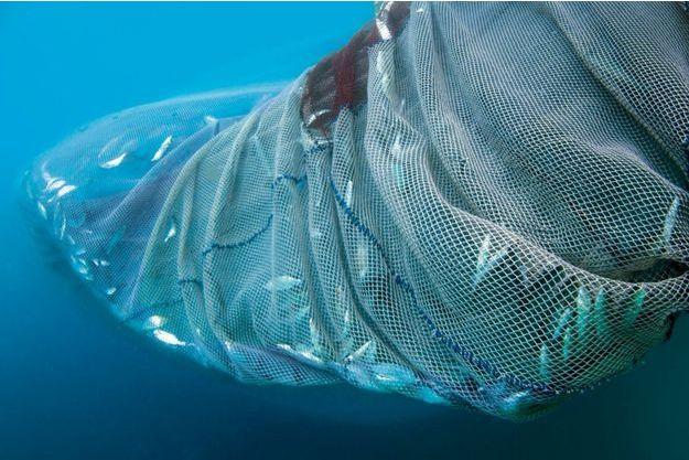 Les océans seront-ils devenus stériles en 2050 ? Surpeche-enquete-sur-une-catastrophe-en-cours