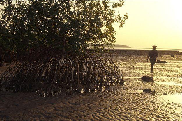 Une plage dans l'archipel bissau-guinéen des Bijagos.