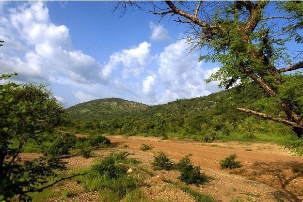 Parc national de Pendjari au Bénin.