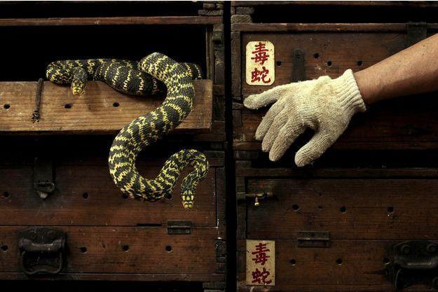 Une Chinoise de 21 ans décède mordue par un serpent acheté en ligne (image d'illustration)