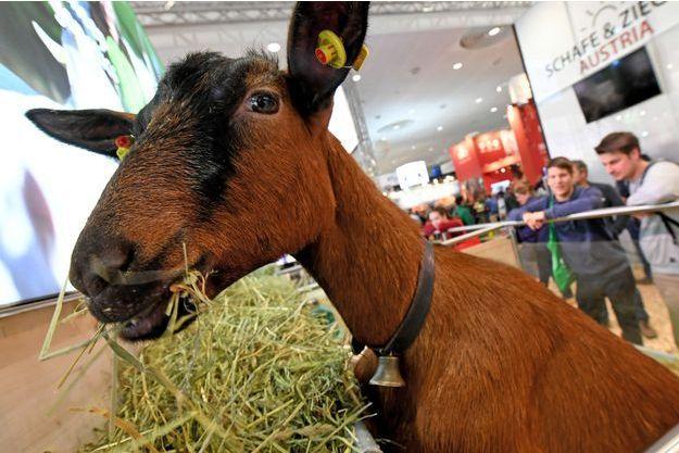Un homme a volé une chèvre préposée à l'entretien des pelouses du jardin des Tuileries, près du Louvre. (image d'illustration)