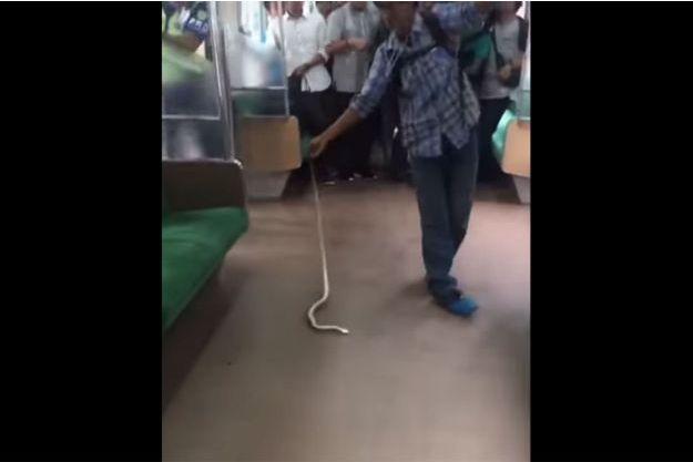 Le voyageur a frappé le serpent contre le sol.