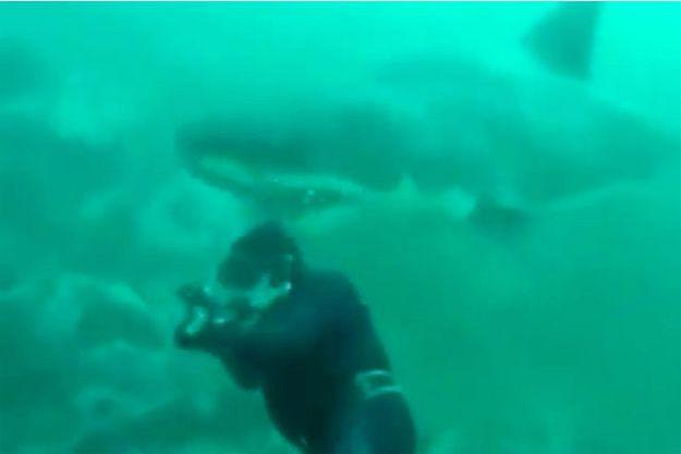 Le requin est arrivé derrière le plongeur.