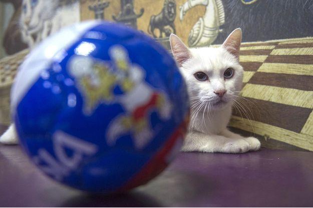 Achille est le pronostiqueur officiel de la Coupe du monde de football 2018 en Russie.