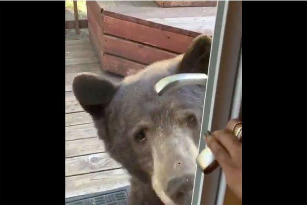 L'ours devant la cabane dans le Nevada.