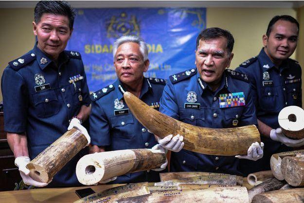 Les 159 kilos d'ivoire ont été saisis à l'aéroport de Kuala Lumpur, en Malaisie.