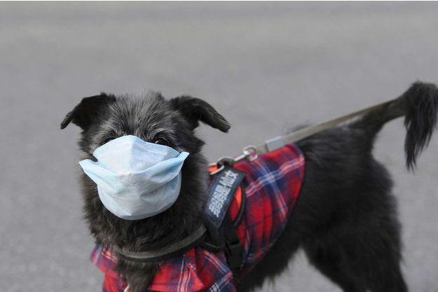 Vox Populi - Page 17 Coronavirus-a-Hong-Kong-un-chien-controle-positif-et-place-en-quarantaine