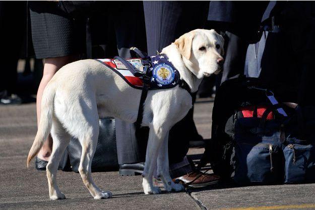 Sully, le labrador de George H.W. Bush