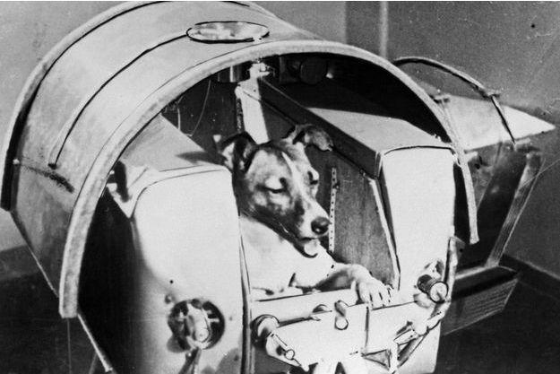 La chienne russe Laïka, le 13 novembre 1957