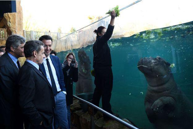 Nicolas Sarkozy, ici accompagné de Guillaume Peltier, est aussi allé voir des hippopotames.