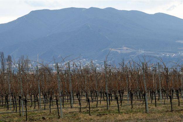 Vignes géorgiennes à Saguramo.