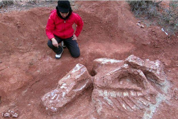 Une chercheuse en train d'exhumer le squelette du dinosaure trouvé en Argentine.