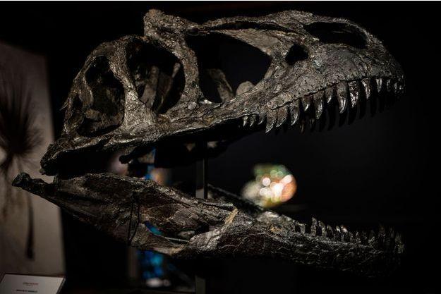 Crâne d'un Allosaure datant du Jurassique.