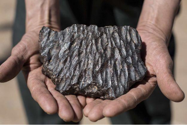 les météorites sont très lourdes à cause de leur densité en métaux. Ici, une orientite proposée par un revendeur d'Erfoud.