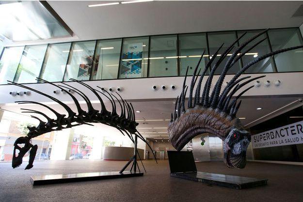 Une reconstitution du Bajadasaurus pronuspinax est exposée au Centre culturel de la science à Buenos Aires.