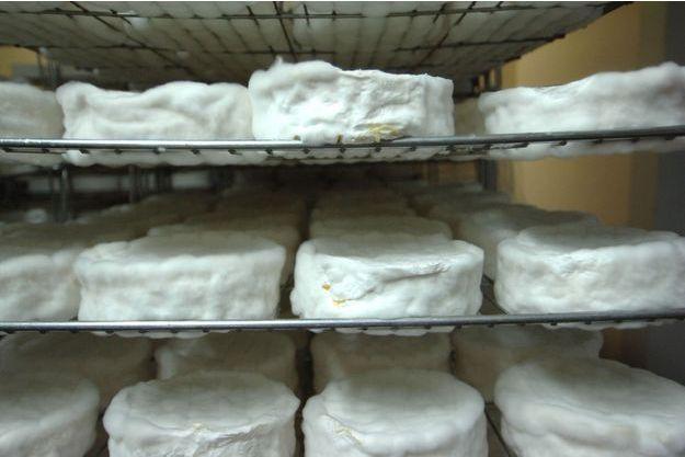 Près de 6.000 boîtes de camembert rappelées après la découverte de la bactérie E.Coli (image d'illustration)