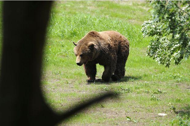 Un ours en Espagne (image d'illustration).
