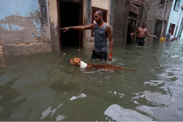 Les animaux domestiques ont aussi subi les effets dévastateurs de l'ouragan Irma, comme ici à La Havane, à Cuba.