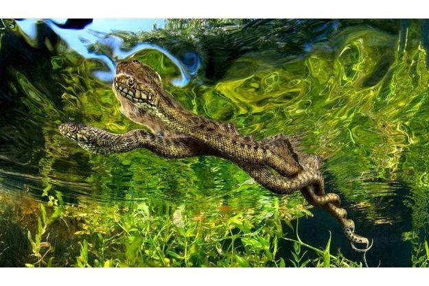 Des amours qui n'en finissent pas. La couleuvre vipérine est le seul serpent à s'accoupler dans l'eau. Ces deux spécimens peuvent rester ainsi enlacés pendant une ou deux heures.