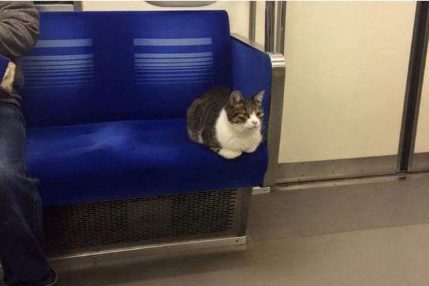 Une des apparitions du chat de la ligne Seibu Ikebukuro.