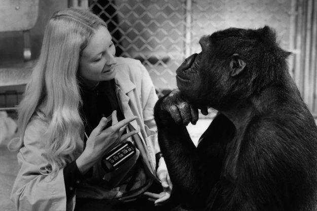 Penny Patterson et Koko dans le film de Barbet Schroeder.