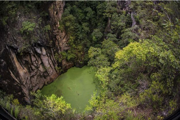 Dans la Daintree Forest, un lac uniquement constitué d'eau de pluie.