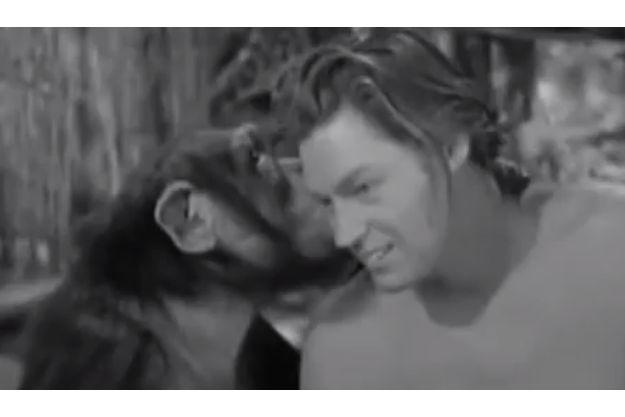 "Cheeta, dans ""Tarzan, l'homme-singe""."