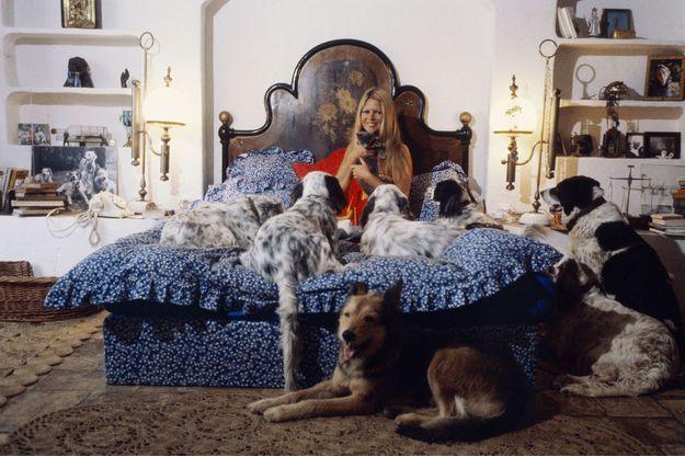 Juillet 1980 : entourée de ses chiens, Brigitte Bardot dans son lit chez elle à Saint-Tropez dans sa maison de la Madrague.