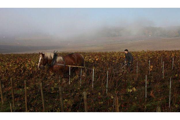 Benoît Lahaye travaille en culture biologique et laboure ses quatre hectares de vignes comme autrefois. Il a fait de Bouzy l'un des plus hauts lieux de la viticulture champenoise.