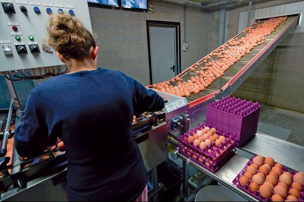 Une ligne de production en Belgique où des millions d'œufs ont été détruits.