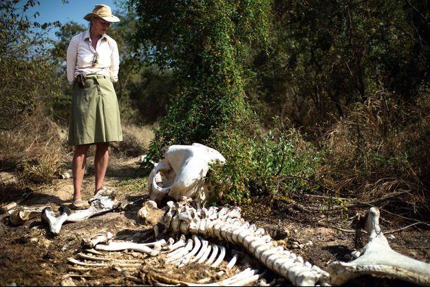 Dans la région du Mayo-Kebbi Est, au Tchad, la Française StéphanieVergniault, présidente de SOS éléphants du Tchad, devant les restes d'un éléphant massacré.