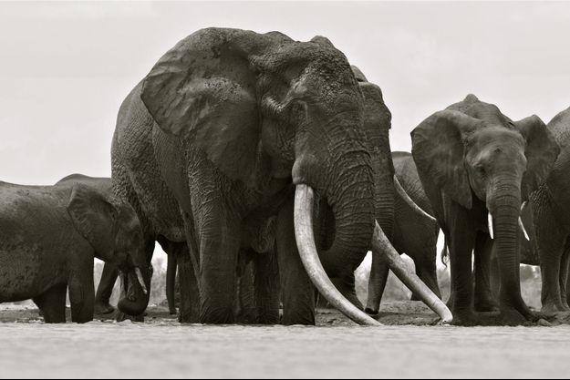 Satao a été tué par des braconniers fin mai, dans le parc national de Tsavo.