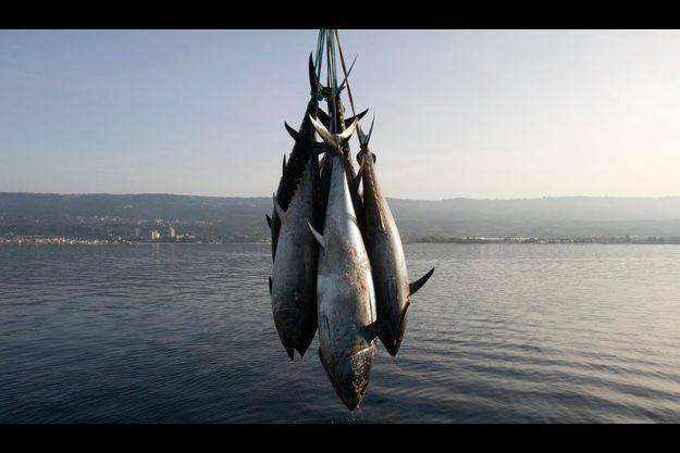 Le thon rouge ne sera plus exportable d'ici dix-huit mois a annoncé Jean-Louis Borloo.