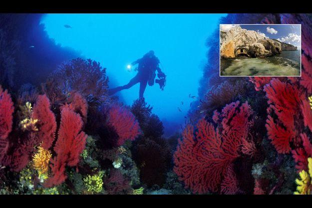 Spectaculaire mais pas toxique. Un pêcheur lance sa ligne près d'une bouche d'égout qui, il y a trente ans, déversait une boue infecte dans la calanque de Cortiou (en médaillon). La nouvelle station d'épuration souterraine de Marseille (la plus grande du monde) a nettement amélioré la qualité de ces eaux usées. A gauche, sous le projecteur du plongeur dans le canyon à l'est de l'île de Riou, les gorgones rouges sont resplendissantes.