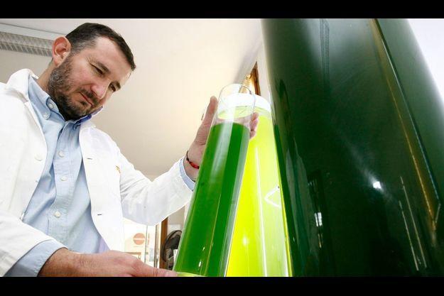 Le rapport de l'INERIS confime la dangerosité des algues vertes