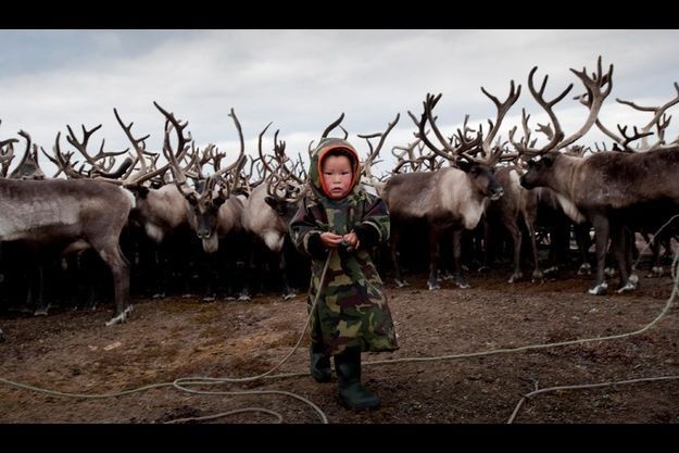 Alic, 3 ans, devant le troupeau de rennes de sa famille.