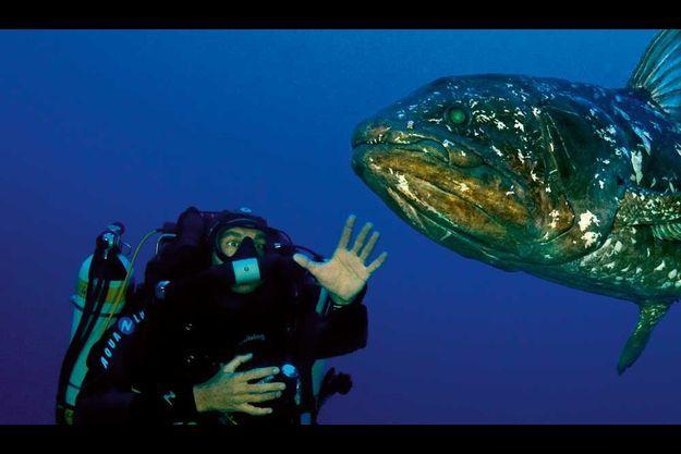 En pleine mer, dans l'océan Indien, à quelques milles seulement de la côte sud-africaine, mais à 100 mètres de profondeurs, un cœlacanthe de 2 mètres se laisse approcher sans crainte pour la première fois.