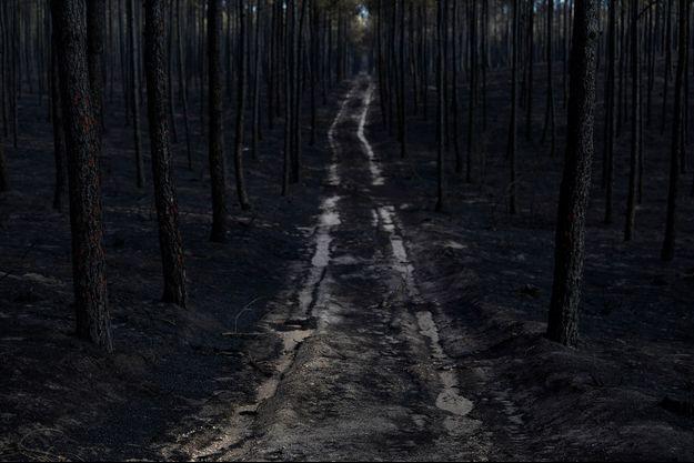 Au Portugal, les flammes ravagent le pays depuis cet été.