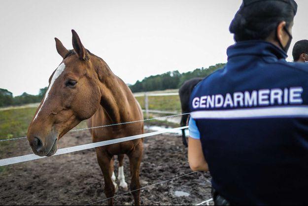 Depuis le mois d'août, des dizaines d'enquêtes ont été ouvertes à la suite de mutilations d'animaux.