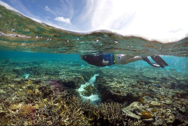 Un touriste plongeant sur l'île Lady Elliot, en juin 2016.