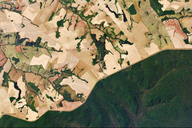 La route 277 traverse l'État de Paraná, dans le sud du Brésil, et divise la forêt luxuriante du parc national d'Iguazú en une mosaïque de fermes de canne à sucre.