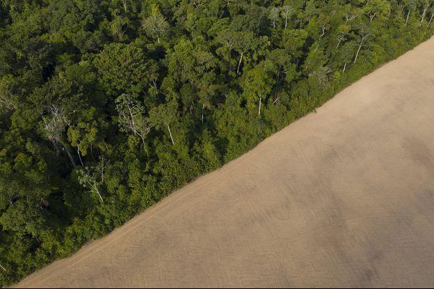 Entre cultures et forêt, en Amazonie.