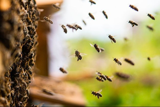 Des abeilles rentrent dans leur ruche.