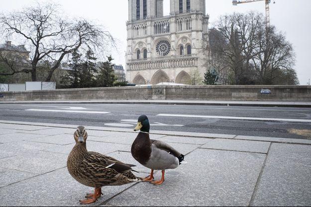 Des canards devant Notre-Dame de Paris.