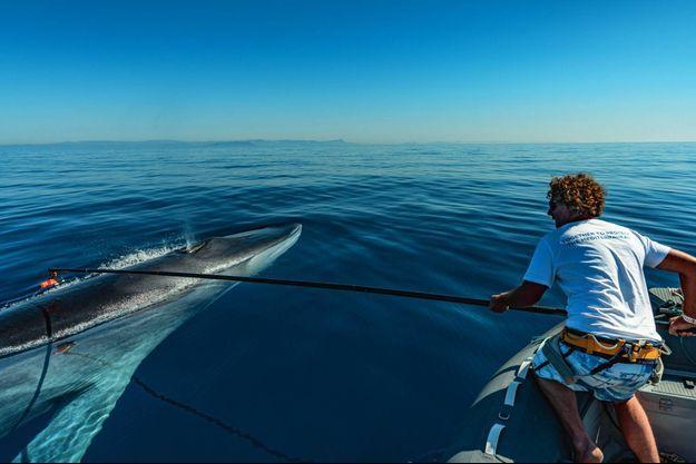 20% des mammifères marins échoués portent des traces d'accident.